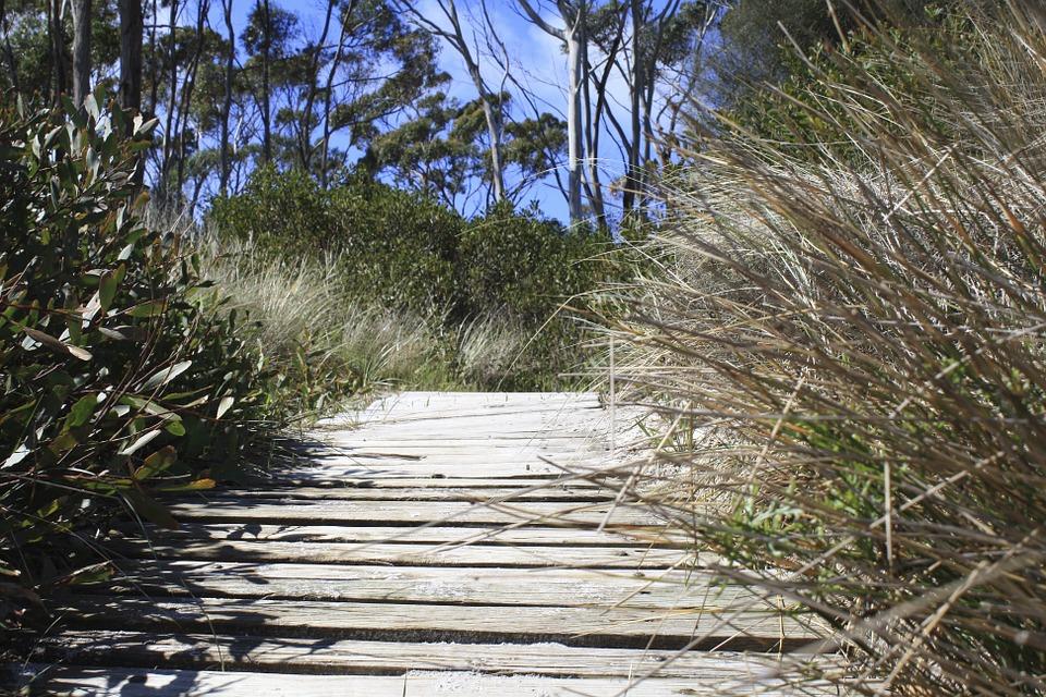 Tasmania track.jpg