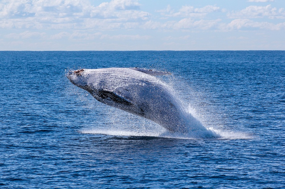 See mighty whales