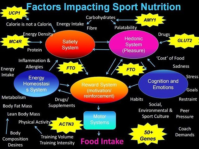 @NanciGuestRD talks #Nutrigenomics & Athletic Performance.  Athletes are NOT average! We need to personalize nutrition recommendation based on athletes' individual profiles. Nutrition and sports medicine are not trends, they are #SCIENCE and #RESEARCH-based. We need regulated, trained health professionals to interpret genetic data! Learn about #nutrition #genetictesting in #yyc --  http://ow.ly/sAg530cAYxs  #sportsdietitian #biochemistry #genetics #endurance #strength #athlete #training #yycfit #yycdietitian #yycnutritionist