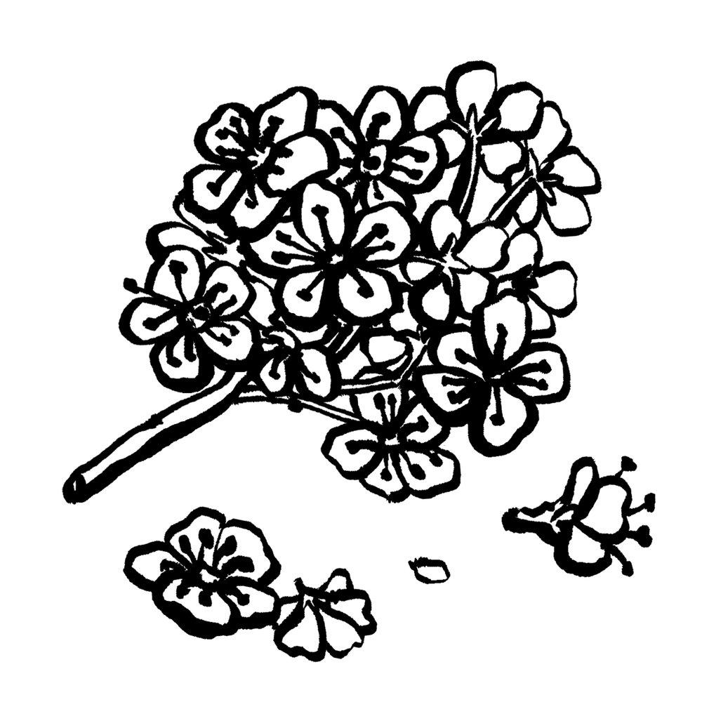 Jeju Blossom