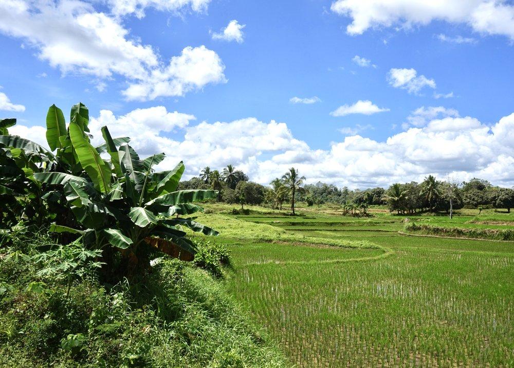 Philippines-Bohol