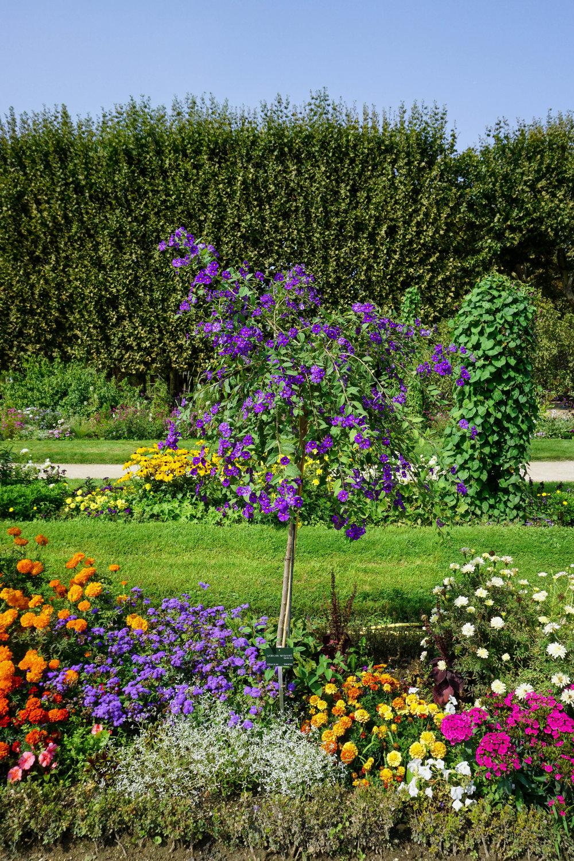 Paris-Jardin des Plantes