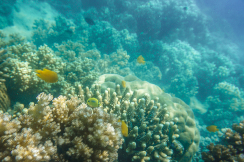 Queensland - Fitzroy Island