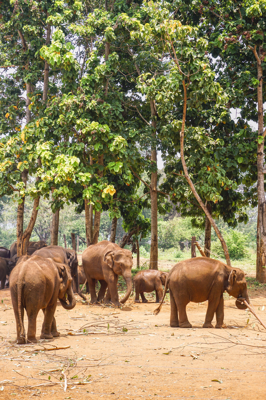 Sri Lanka- Elephant Transit Home