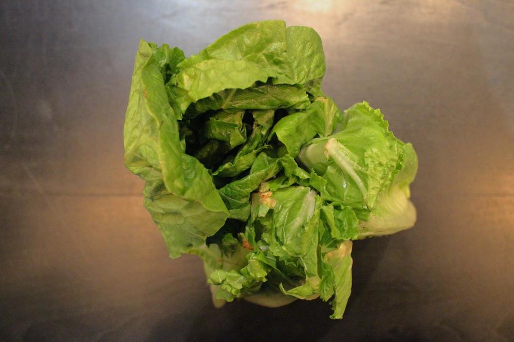organic romaine lettuce owen and alchemy.JPG