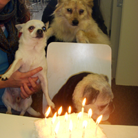 Lollie's Bday 2011 with Friends, Frankie & Lucy