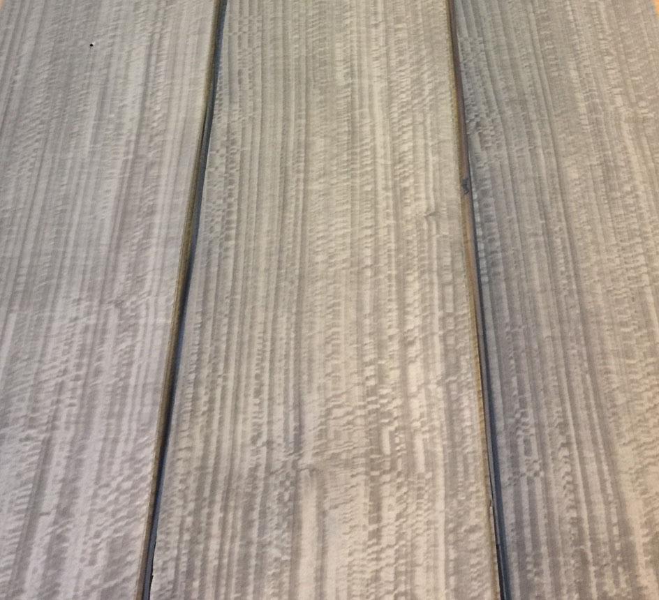 silver eucalyptus cropped.jpg