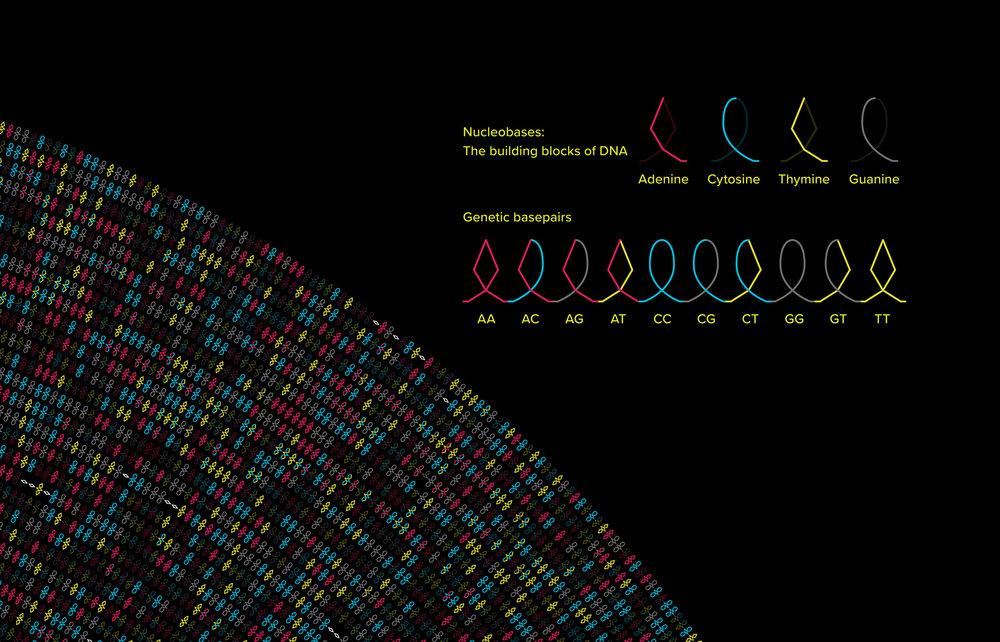Barr_VisualizingGeneticInfo3_72dpi.jpg