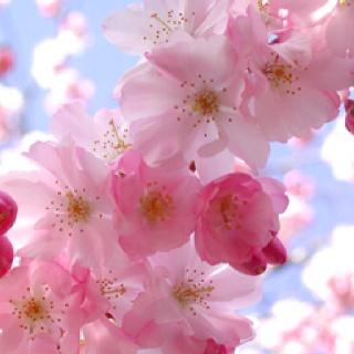 248373d8fc988409606e5ce7b554fe90--deer-silhouette-pink-blossom.jpg