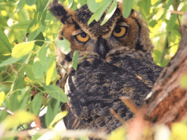 Irvine doula Irvine lactation support Owl in tree