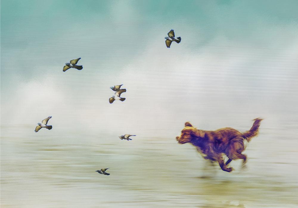 Chasing them down