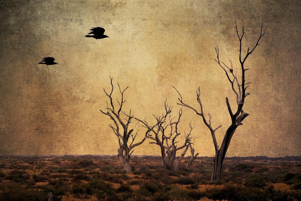 As far as the crow flies