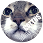 cattus-quartet-instagram.png