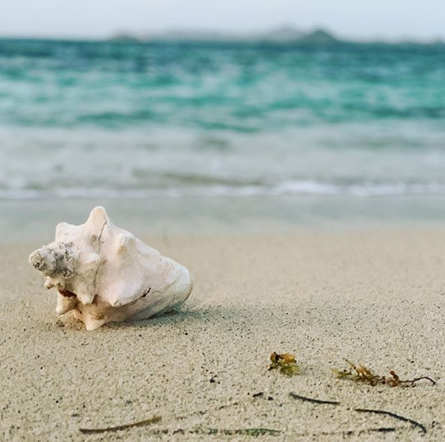 """In""""conch"""" you missed it, I'm on vacation! Lol. Sorry to those of you who have emailed or sent texts. I'm on a boat and no cell service - spotty WiFi in beachside bars... On the water and off the grid. Back next week! Xo"""