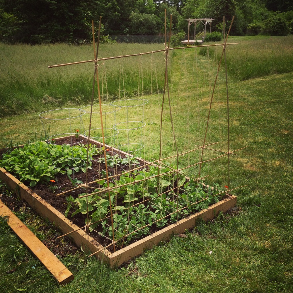 Peas, Beans, Beets and Radishes