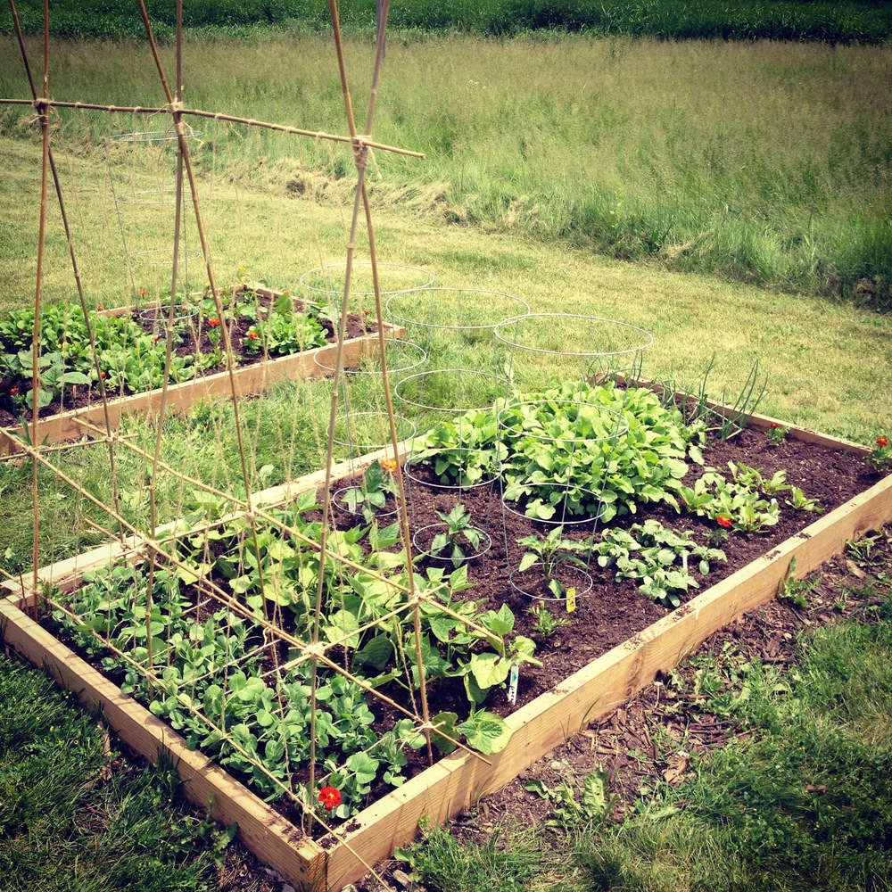 Raised Bed Garden In Progress