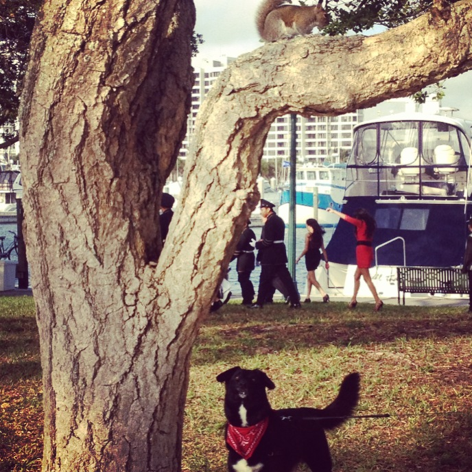 Squirrels are a hit Downtown Sarasota