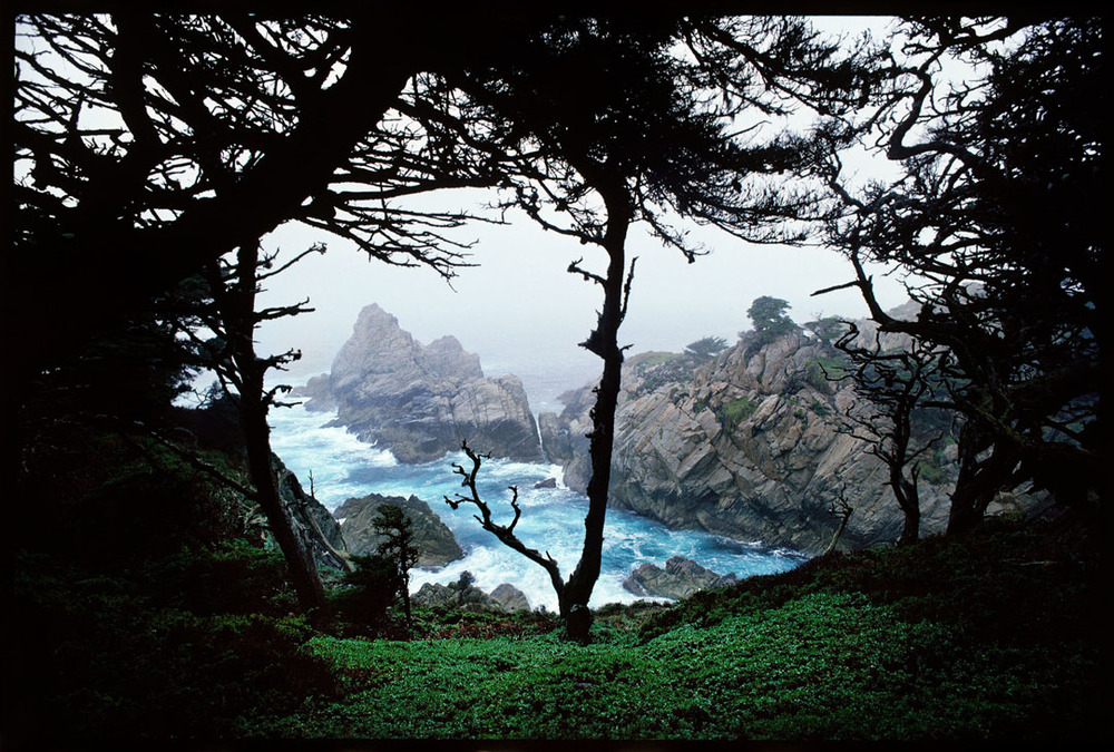 Point Lobos, Ca.