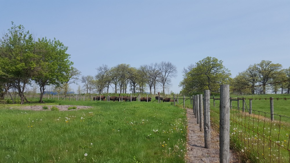 Fermilab_bison2