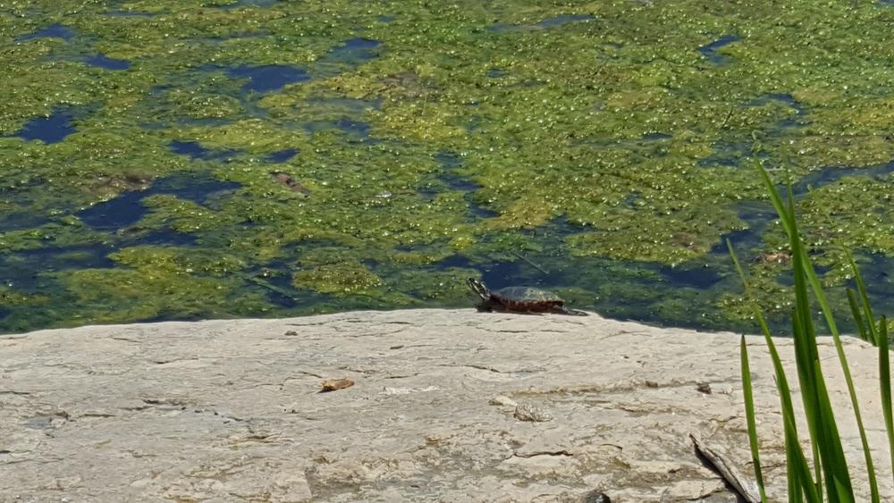 Lake Katherine Turtle Bay