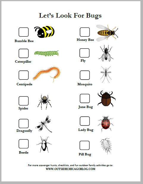 Bugs - From pollinating flowers to trapping mosquitos to aerating soil (and many, many other things) bugs really do make this world go round! This is a great way to introduce some of these concepts to your kiddos as you search for bugs around the neighborhood, a local park or your own backyard.