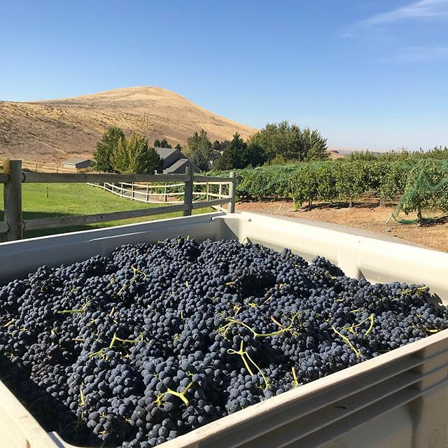 Can you guess what our first red pick of the year was? Hint it's one of our Artist Series bottles being released this Saturday!  #DRINKupsidedown #WAwine #CandyRidgeVineyard #ArtistSeries #Rhone #Varietal #WashingtonWine
