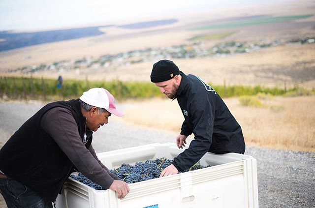 Harvest is cruising by! The process and care that go into every cluster of grapes that find their way into your bottles can be found on @usdoingwine's story. Pictured here is winemaker Seth Kitzke and Israel from WeatherEye vineyard obsessing over every cluster of Grenache making its way into the bin.  #DRINKupsidedown #USdoingwine #WeatherEye #Vineyard #Grenache #WAwine #redmtnava #rhonewine #rhone #varietals 📷 @kreadivone . . . #hoodriver #tastingroom #winetasting #grenache #Syrah #grenacheblanc #fieldblend #minimalintervention #wine #harvest #harvest18 #crush18 #limitededition