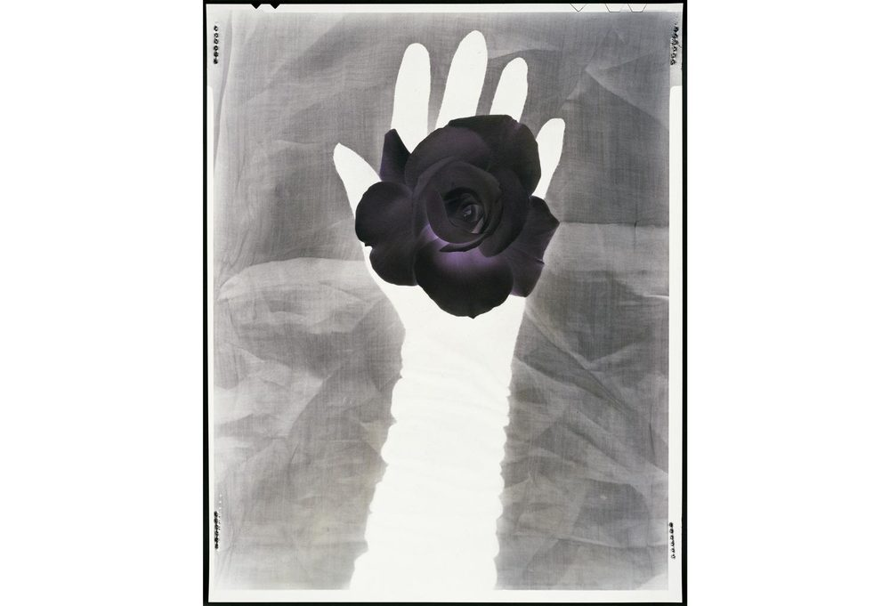 black+rose_0005_black+rose.jpg