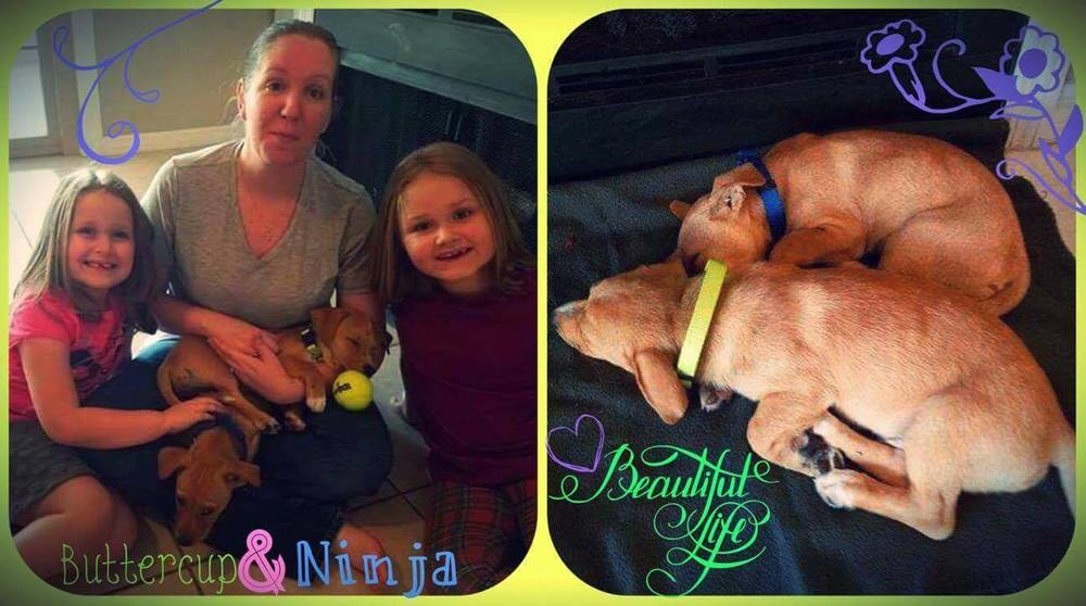 Buttercup & Ninja Adoption Pics.jpg