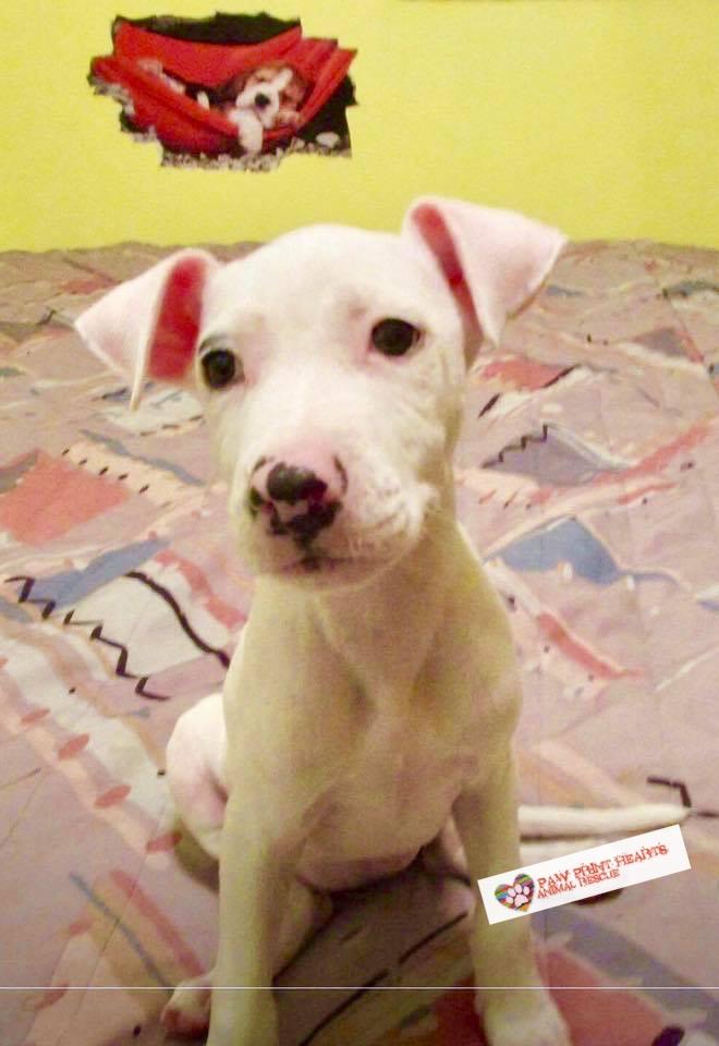 Puppy #3 w: Logo.jpg