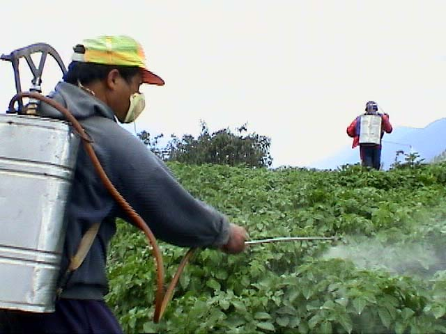 Spraying cotton crops with pesticide