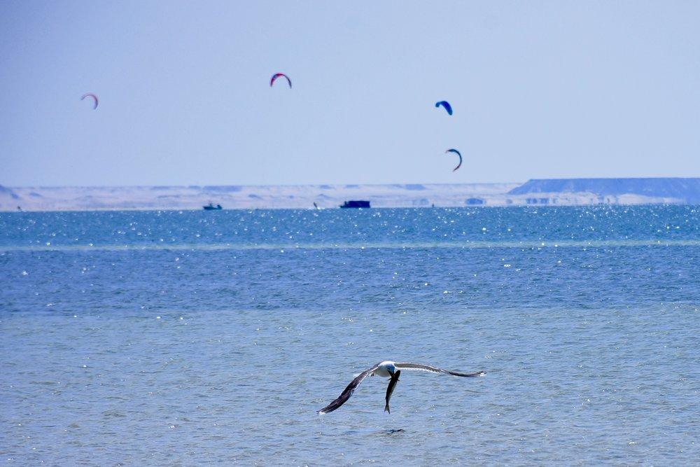 Dakhla lagoon Morocco | Kite Control kitesurf school Portugal.jpg