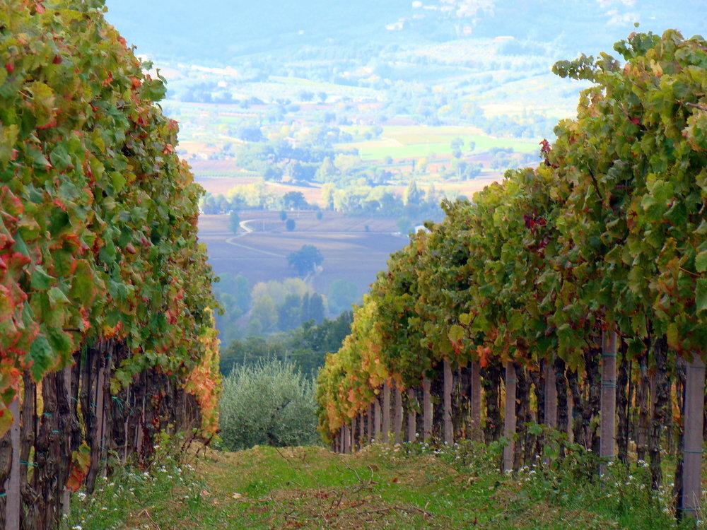 """Montefalco - """"Down the Valley"""", foto di  """"la fattina"""", Flickr.com"""