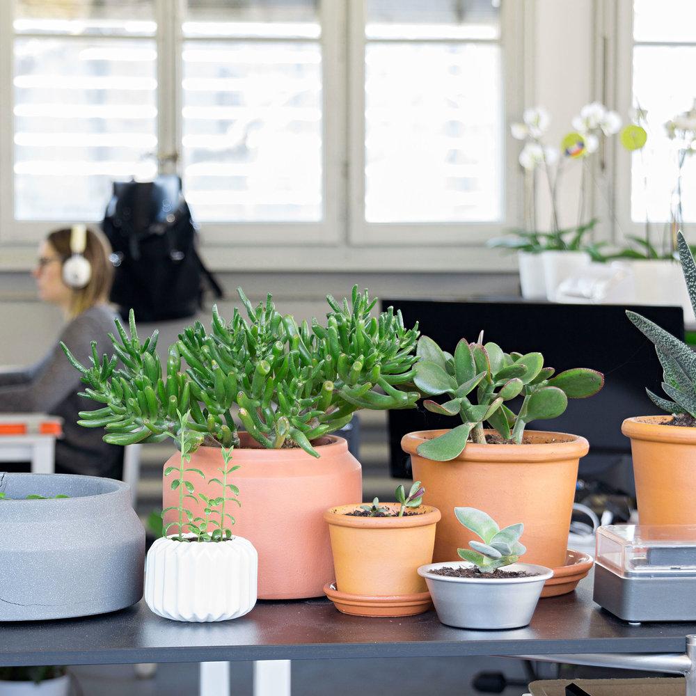Les plantes y sont bienvenues!