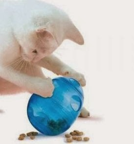 Egg-Cercizer-with-Kitty