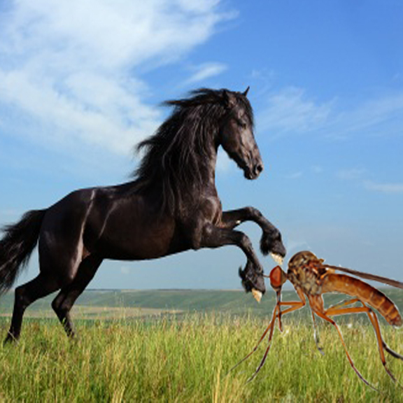 horse-battling-mosquito