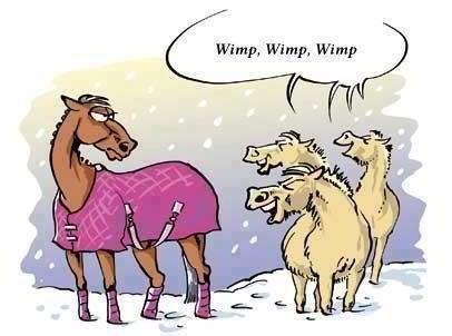 horse blanket cartoon
