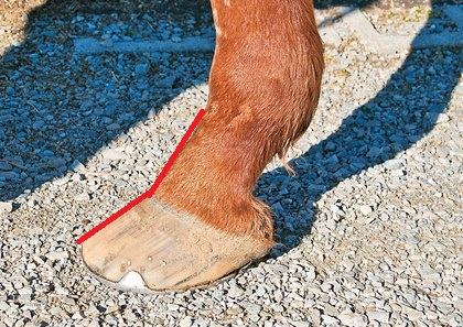 Photo:   http://www.thehorse.com/articles/36890/long-toe-low-heel-hooves-let-them-grow-naturally