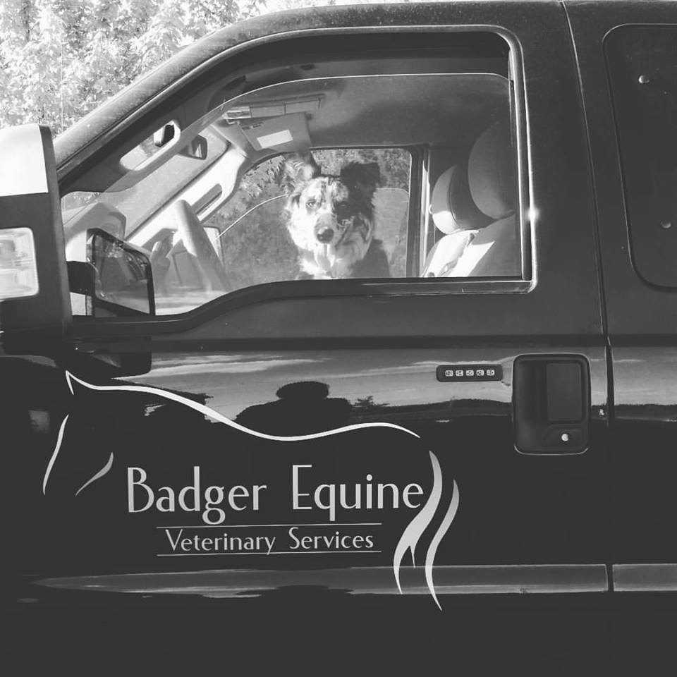 Dog in Badger Equine Veterinary Services truck