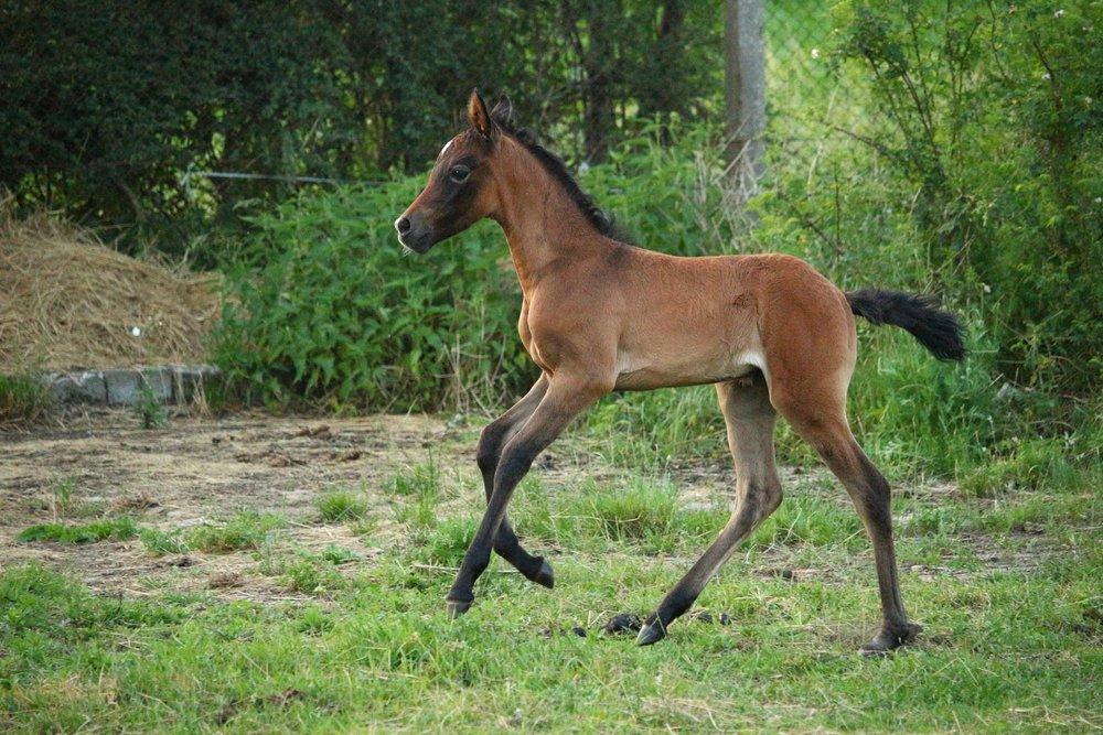 Bucking foal