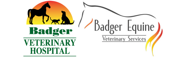 Badger Veterinary Hospital & Badger Equine in Janesville & Cambridge, WI