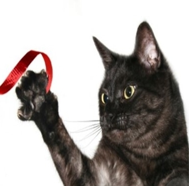 Holiday Pet Hazard - Ribbon and Tinsel