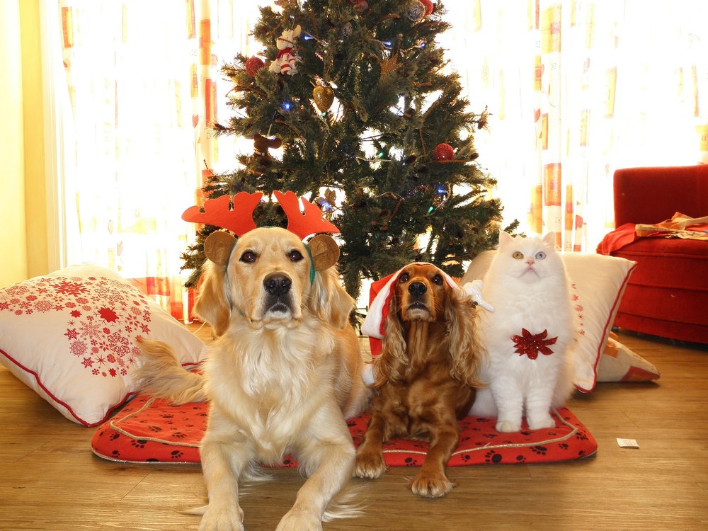 Two dogs and a cat with their Christmas presents under the Christmas tree