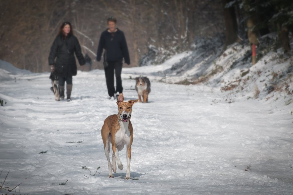2 people and 2 dogs walking in the snow during winter