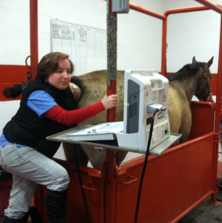Dr. Allison Kiser performs ultrasound on mare during breeding soundness exam