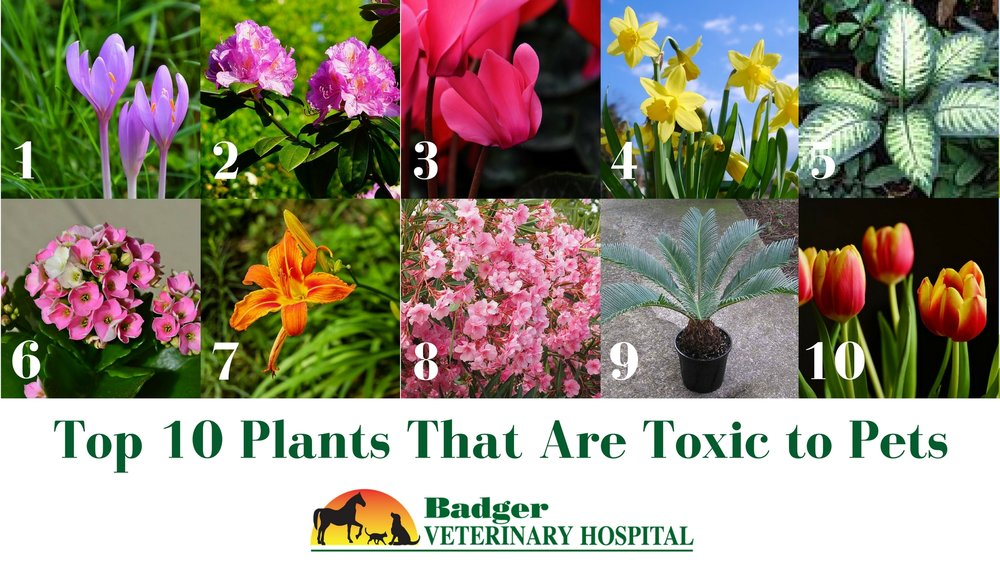Top 10 Plants that are toxic to pets