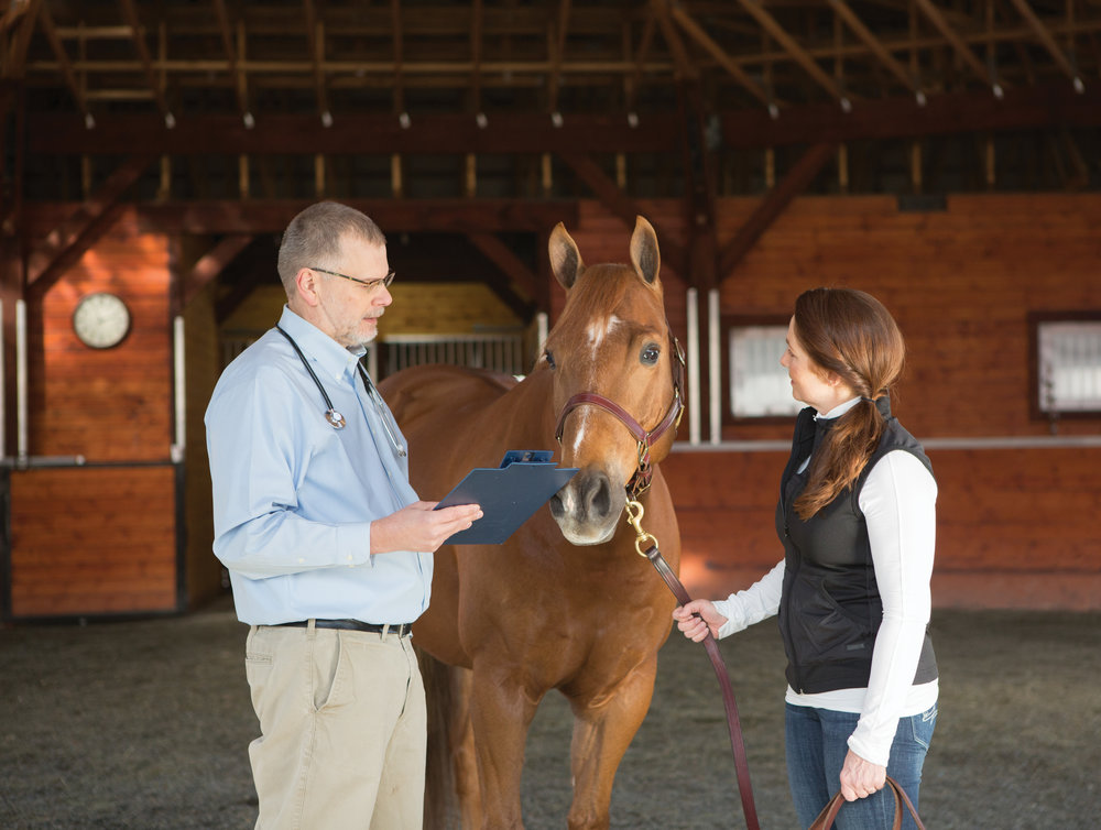 Equine veterinarian with client