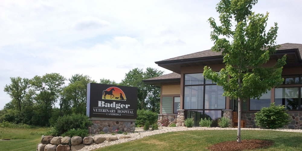 Badger Veterinary Hospital-Cambridge | Cambridge Wisconsin Veterinarian