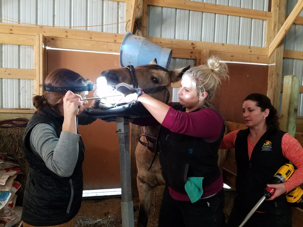 Equine dental care with Dr. Toria Waldron of Badger Equine Veterinary Services