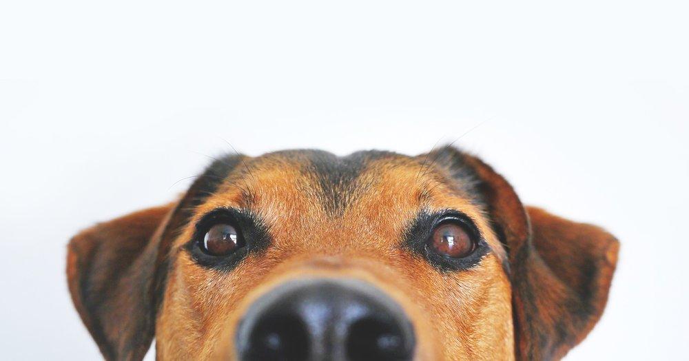 Badger Veterinary Hospital's online pet pharmacy